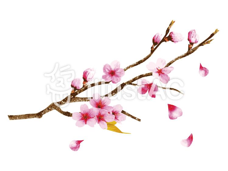 リアルな桜の枝イラスト No 1034481無料イラストならイラストac