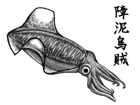 Animal squid