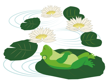 Frog lying on a lotus leaf