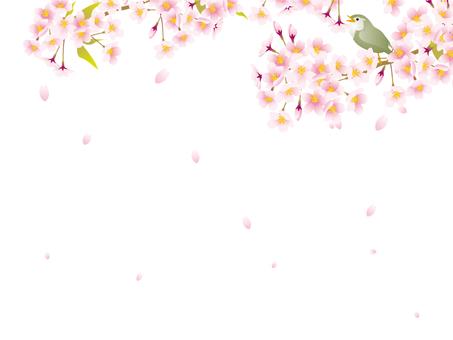 桜の花フレーム11
