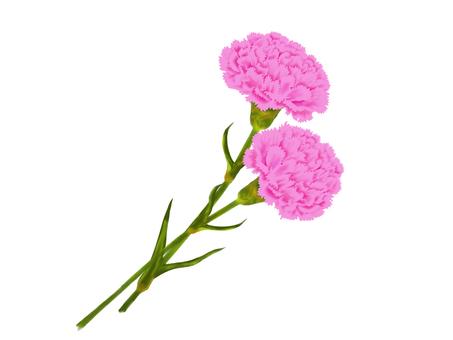 Carnation_dark pink