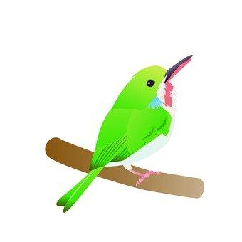 Green bird (branch)