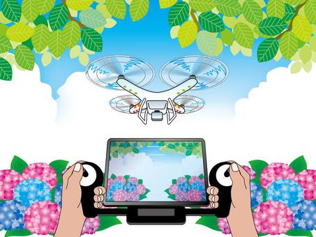 Hydrangea (11) fresh green, drone and blue sky