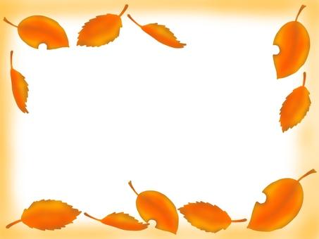 Fallen color of fallen leaves