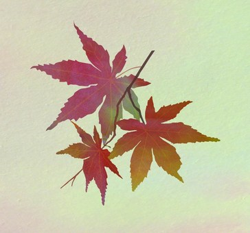 Color pattern of autumn leaves