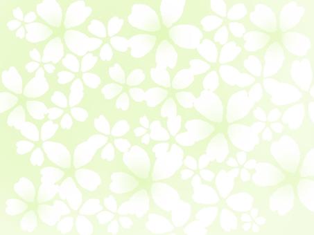 벚꽃 만개 녹색