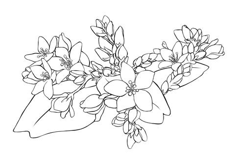 Soba flower