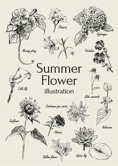 Summer flower illustration