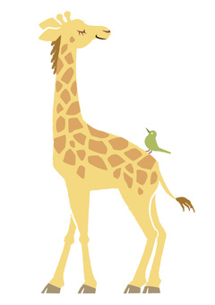 Giraffe and a small bird