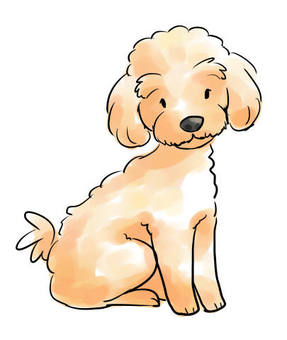 Toy poodle (watercolor)