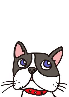 dog_ French bulldog 18