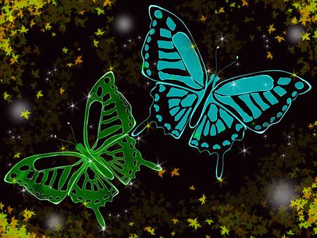 밤에 춤추는 나비 (컬러)