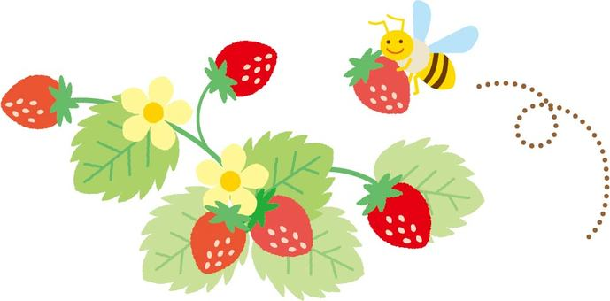 Strawberry field and bee