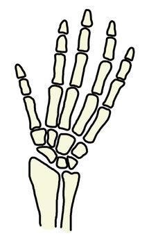 Hand bone 758 x 1200