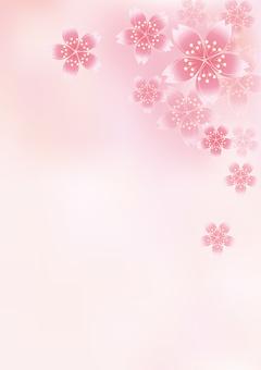 Sakura Cherry Blossoms 4