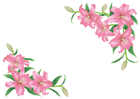 Key frame_Oriental Lily 2