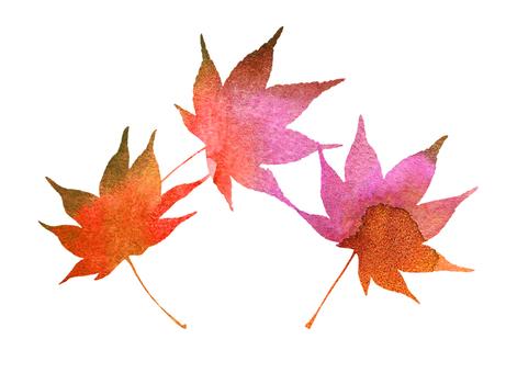 Autumn leaves autumn maple watercolor