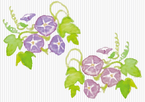 """Watercolor"" Morning Glory (Pink / Purple)"