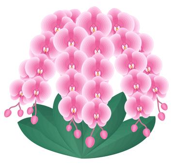 Phalaenopsis orchid stock