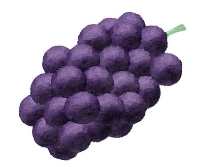 Handwritten grapes