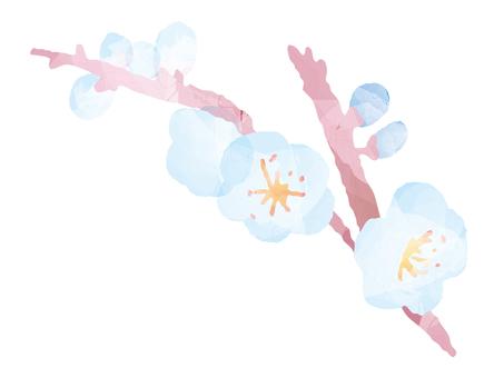 White plum 2