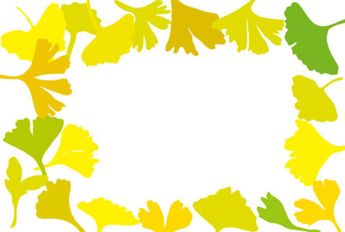 Autumn frame colored leaves of ginkgo biloba