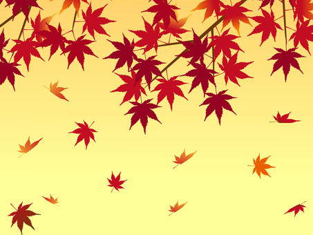 Japanese peaceful material Maple leaves of autumn sunsets Momiji
