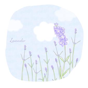 Lavender (handwritten)