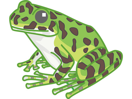 Okinawaite frog
