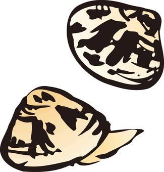 Shellfish, clams