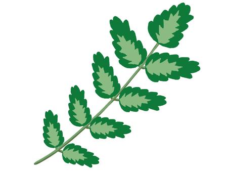 Yam leaves