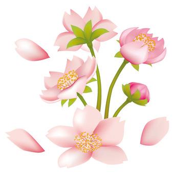 Spring · Sakura · Sakura 01