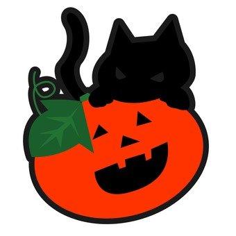 Black cat and Jack Lantern