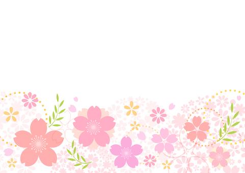 Cherry blossoms 249