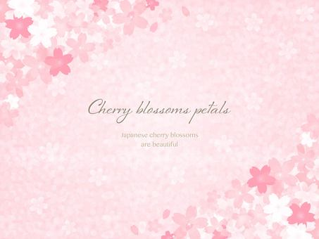 Cherry petal background background illustration material