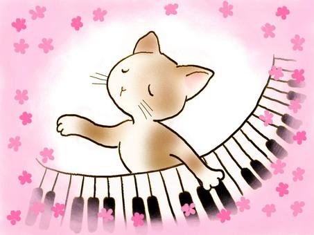 Piano cat 17