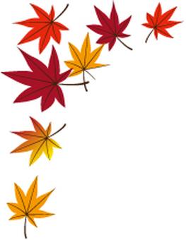 Fallen leaves 13