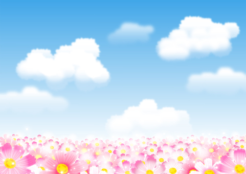 Cosmos field background with blue sky