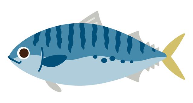 바다 생물 - 고등어