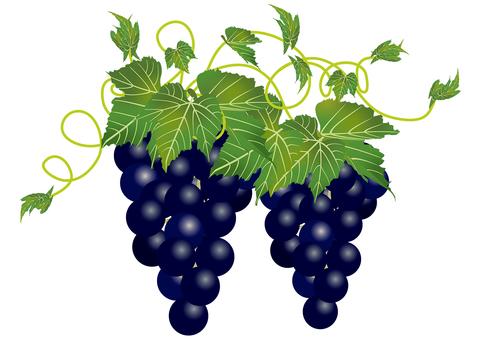 Delicious grape 14