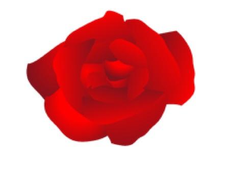 빨간 장미 꽃