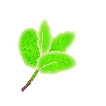 Clean herbs