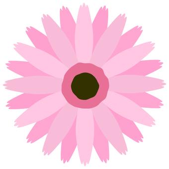 Gerbera (pink)