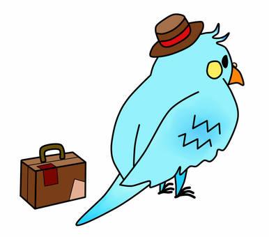 B departing from a parakeet