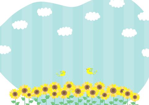 Scenery of sunflower