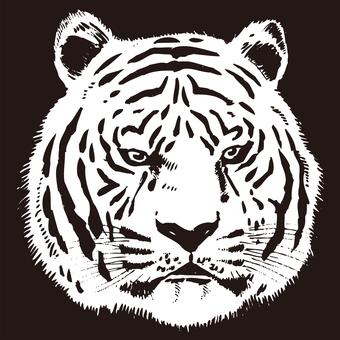 Tiger Tiger Vector Story