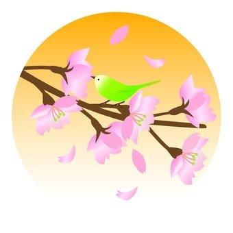 벚꽃과 휘파람새