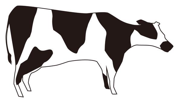 소 (홀스타인)