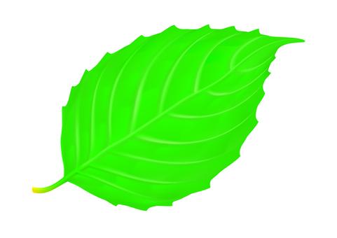 Leaf _001
