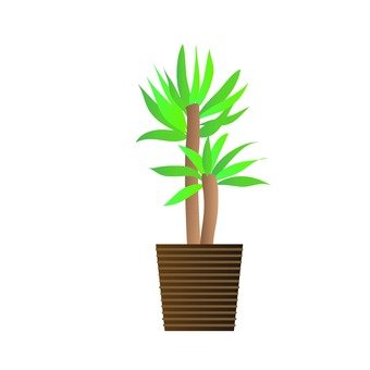 Houseplant - Youth Tree